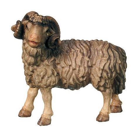 Ram for wood crèche - color