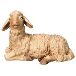 Lying Sheep
