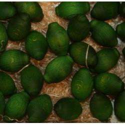 Frutta scolpita in legno profumata limone