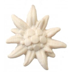 Edelweiss carved in maple wood